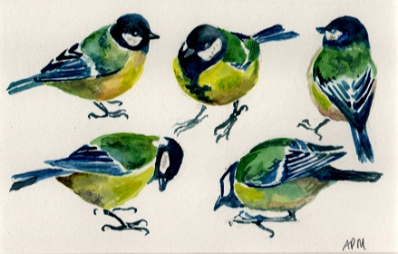 Great tits, 2012